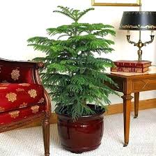 indoor trees that don t need light easiest indoor plants indoor plants low light of the easiest