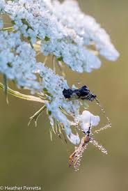 backyard naturalist blog