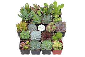 amazon com shop succulents unique succulent collection of 20
