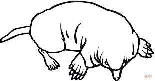 mole 12 coloring free printable coloring pages