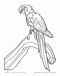 parrot worksheet education
