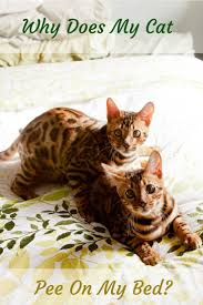 My Cat Peed On My Bed 177 Best Happy U0026 Healthy Pet Care Tips Images On Pinterest