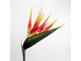 bird of paradise flower artificial bird of paradise flower strelitzia stem permabloom