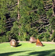 native plants brisbane australian gardens at the brisbane botanic gardens brisbane