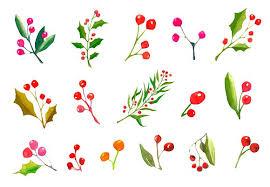 christmas plants a set watercolor christmas plants graphics creative market