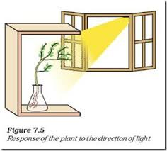 What Is Growth Movement Of A Plant Toward Light Called Coordination In Plants July 2015