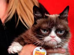 Internet Meme Cat - report living meme grumpy cat awarded 710 000 in copyright