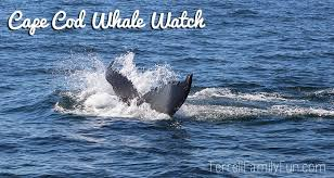 Whale Watches Cape Cod - whale watches provincetown cape cod dolphin fleet review