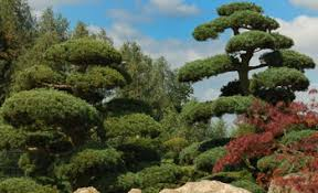 ornamental trees japanese garden design