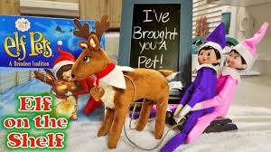 on shelf reindeer purple pink on the shelf reindeer pet arrives pulling