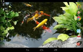 realistic koi live wallpaper android apps on google play