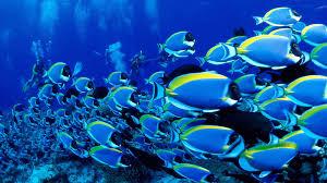 animals ocean tropical fish wallpaper background hd wallpapers13 com