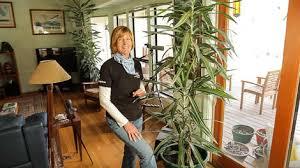 Easy Care Indoor Plants Organic House Plant Care U0026 Pest Control Organic Gardening Blog