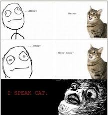 Funniest Memes Ever Tumblr - pinterest kitty love speak cat pictures photos and images for
