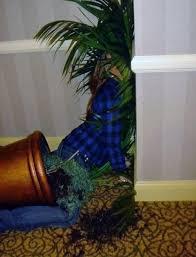 Palm Face Meme - face palm or face plant you make the call meme guy