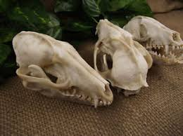 fox skull crafts ornaments home decorations wholesale skull