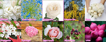 Wedding Flowers January Top 10 Wedding Flowers By Months List Of Bridal Flowers By Months