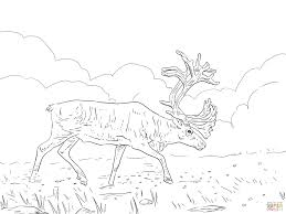 migratory woodland caribou coloring page free printable coloring
