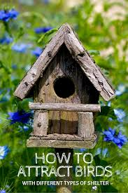 how to attract birds with different types of shelter gardening