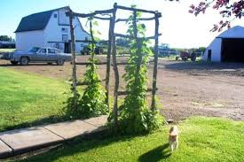 how to build a trellis archway making snazzy re purposed garden arches flea market gardening