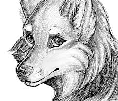 realistic wolf sketch by stolenimages on deviantart
