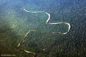 amazon basin view of the rain forest of the amazon basin