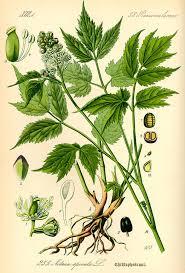 the voynich large plants voynich portal page 2
