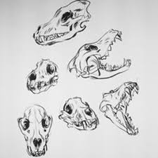 wolf skull drawing best images collections hd for gadget windows