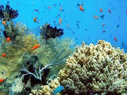 padi scuba diver indepth dive centre phuket idc phuket