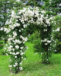 trellis made of branches garden obelisks rose arches