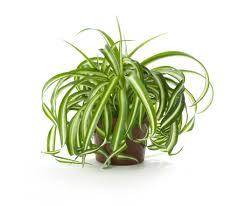 plante d駱olluante chambre chambre plantes dépolluantes pour maison plantes monblogyoga