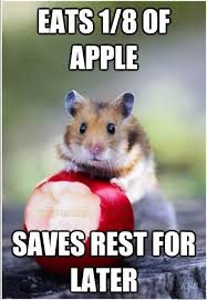 Rodent Meme - 28 very funny mouse meme pictures that will make you laugh