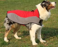 australian shepherd training tips stay some dog training tips dog walking harness and anti