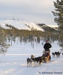 adventure dreams short dogsledding tours in sweden winter
