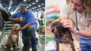 family pet and garden center houston shelter offers respite for pets and their owners displaced