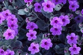 Cute Flower Wallpapers - purple cute wallpaper gzsihai com