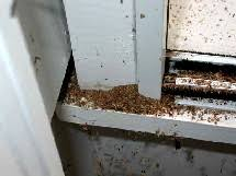 Ants In The Bathroom by Carpenter Ant Help