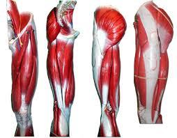 Human Anatomy Physiology Pdf Free Torent Human Anatomy Head Neck Pdf