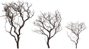 manzanita branches at m a n z u2013 a n i a where to get manzanita