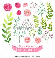 wedding flowers drawing vector floral set colorful floral collection with leaves and