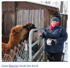 buffalo alpaca startup moving into high gear with help from the