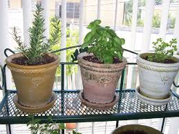 Window Sill Herb Garden by Growing Herbs Indoors How To Grow Herbs Indoors