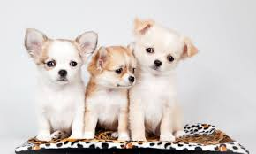 Baby Carpet Baby Animals Dogs Animals Baby Carpet Puppy Three Pictures