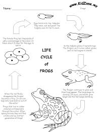 best 25 frog life cycles ideas on pinterest spring cycle