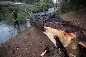 northern california storm downs trees causes major delays at sfo
