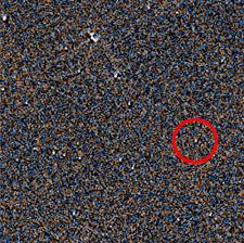 Backyard Astronomer Backyard Astronomers Discover Brown Dwarf