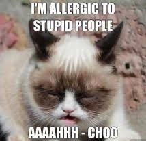 Stupid Cat Meme - grumpy cat dislikes your existence grumpy cat quotes grumpy cat