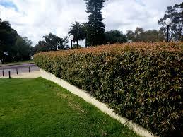 native plant nurseries perth angus u0027s top ten australian plants for very sandy soils gardening