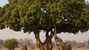 trees san diego zoo animals plants