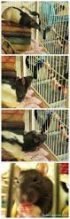 Cheap Rat Cage 102 Best For Rat Rat Images On Pinterest Pet Rats Rat Toys And